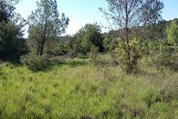 Achat terrains construire saint jean de cuculles for Achat terrain a construire