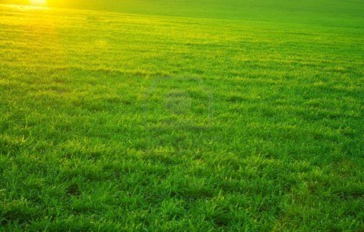 Mas Provencal A Vendre En Camargue vente de terrain à aigues-mortes - mas provence, terrains